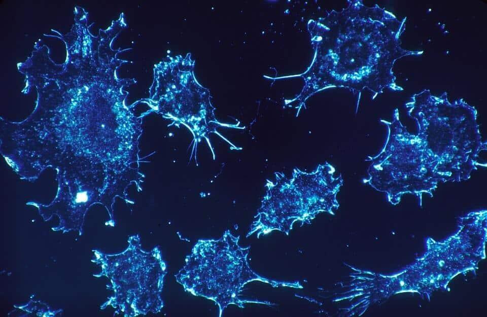 Rakovina - etický kodex